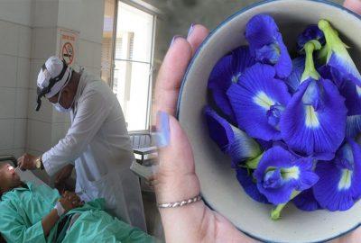 2 bộ phận cực ƌộc trong hoa đậu biếc: Nhiều chị em làm cả nhà ngộ ƌộc vẫn không biết tại sao